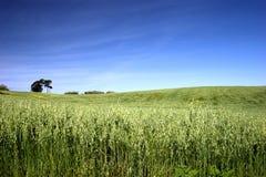 Grüne Landschaft Stockfotos