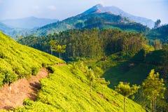 Grüne Landschaft der Teeplantage in Indien Lizenzfreie Stockfotografie
