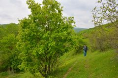 Grüne Landschaft, Fotograf auf Abstand Lizenzfreies Stockfoto