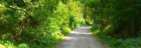 Grüne Landschaft im Waldweg zu Poiana Brasov Lizenzfreie Stockbilder