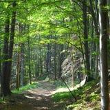 Grüne Landschaft im Waldweg zu Poiana Brasov Stockfotos