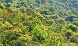 Grüne Landschaft mit Bäumen Lizenzfreie Stockfotos