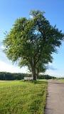Grüne Landschaft mit Baum und starker Baumkronen- und kleinerbank Lizenzfreies Stockfoto