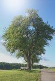 Grüne Landschaft mit Baum und starker Baumkronen- und kleinerbank Lizenzfreie Stockfotografie