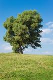 Grüne Landschaft mit Hintergrund des blauen Himmels Stockbilder