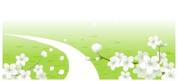 Grüne Landschaft mit weißen Blumen vektor abbildung