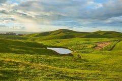 Grüne Landschaft in Neuseeland Stockfotografie