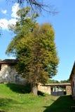 Grüne Landschaft ruinen Verstärkte mittelalterliche sächsische evangelische Kirche im Dorf Cobor, Siebenbürgen, Rumänien Stockbilder