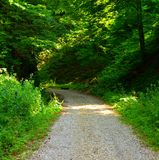 Grüne Landschaft Straße zu Poiana Brasov Stockbilder