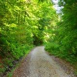 Grüne Landschaft Straße zu Poiana Brasov Stockfotografie