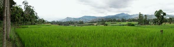 Grüne Landschaften lizenzfreies stockfoto