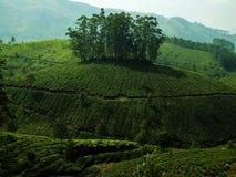 Grüne Landschaftsteeplantage stockfotografie