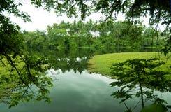 Grüne landwirtschaftliche Landschaft Stockfoto