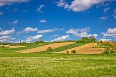 Grüne landwirtschaftliche Landschaft unter blauem Himmel Lizenzfreie Stockbilder
