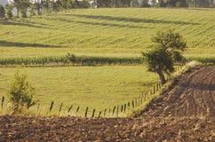 Grüne Landwirtschaftsfelder im Landschaftssommer gestalten, Polen landschaftlich Stockbild