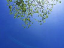 Grüne Laubniederlassungen und blauer Himmel Stockfoto