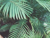Grüne Lebensdauer Stockbild