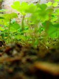 Grüne Lebensdauer Stockfoto
