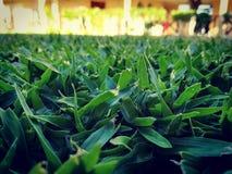 Grüne Lebensdauer Stockfotografie