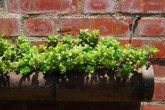 Grüne Lebensdauer auf der Wand stockfoto