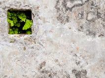 Grüne Lebensdauer in der Wand Stockbild
