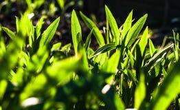 Grüne Leuchte Stockbilder