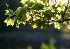 Grüne Leuchte Lizenzfreie Stockfotos