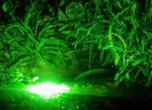 Grüne Lichter stockbilder