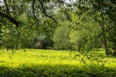 Grüne Lichtung Stockfotografie