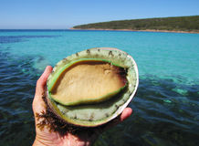Grüne Lippenohrschnecke mit Meer im backgrouund Lizenzfreie Stockfotos