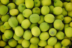 Grüne Lotossamen Lizenzfreies Stockfoto