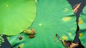 Grüne Lotus-Blätter für Hintergrund Lizenzfreie Stockfotos