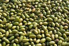 Grüne Mangofrüchte Lizenzfreie Stockbilder
