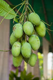 Grüne Mangofrüchte auf einem weißen Hintergrund Lizenzfreies Stockfoto