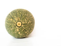 Grüne Melone Stockbilder