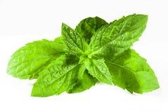 Grüne Minze lizenzfreie stockbilder