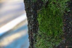 Grüne Moos Insel auf einem Baum, Hintergrund Stockbilder