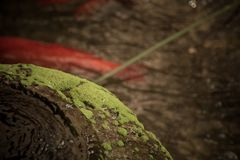 Grüne Moosanlage Stockbild