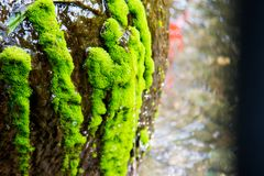 Grüne Moosanlage Lizenzfreie Stockbilder