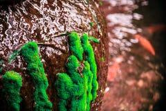 Grüne Moosanlage Stockbilder