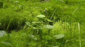 Grüne Mooshintergrundbeschaffenheit stock video footage