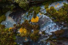 Grüne Mooshintergrundbeschaffenheit Stockfotografie