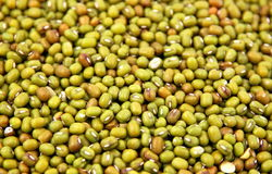Grüne Mungobohnen lizenzfreies stockbild