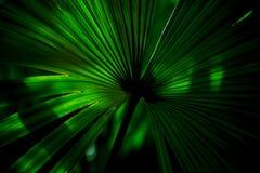 Grüne Muster-Blatt-Blume Lizenzfreies Stockfoto