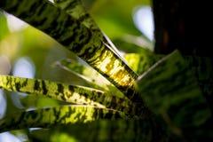 Grüne Muster-Blatt-Blume Lizenzfreies Stockbild
