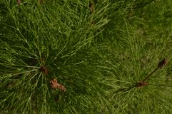 Grüne Nadelanlage auf der Bank von Stockfoto