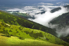 Grüne Natur Stockbild