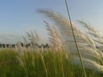 Grüne Natur Lizenzfreies Stockbild