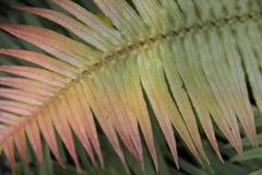 Grüne Natur Stockfoto
