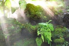 Grüne Natur Lizenzfreie Stockfotos
